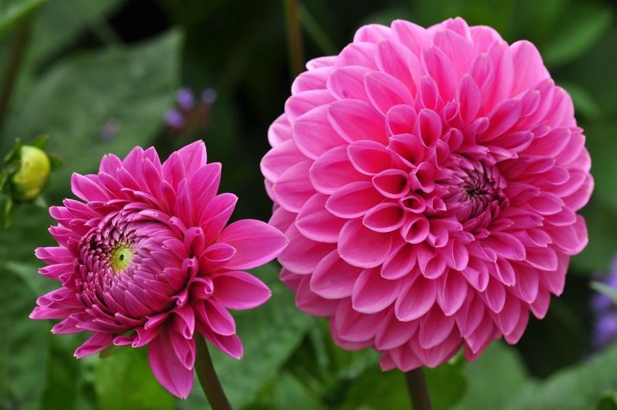 Ein Blumengruss an alle Fotofreunde ......