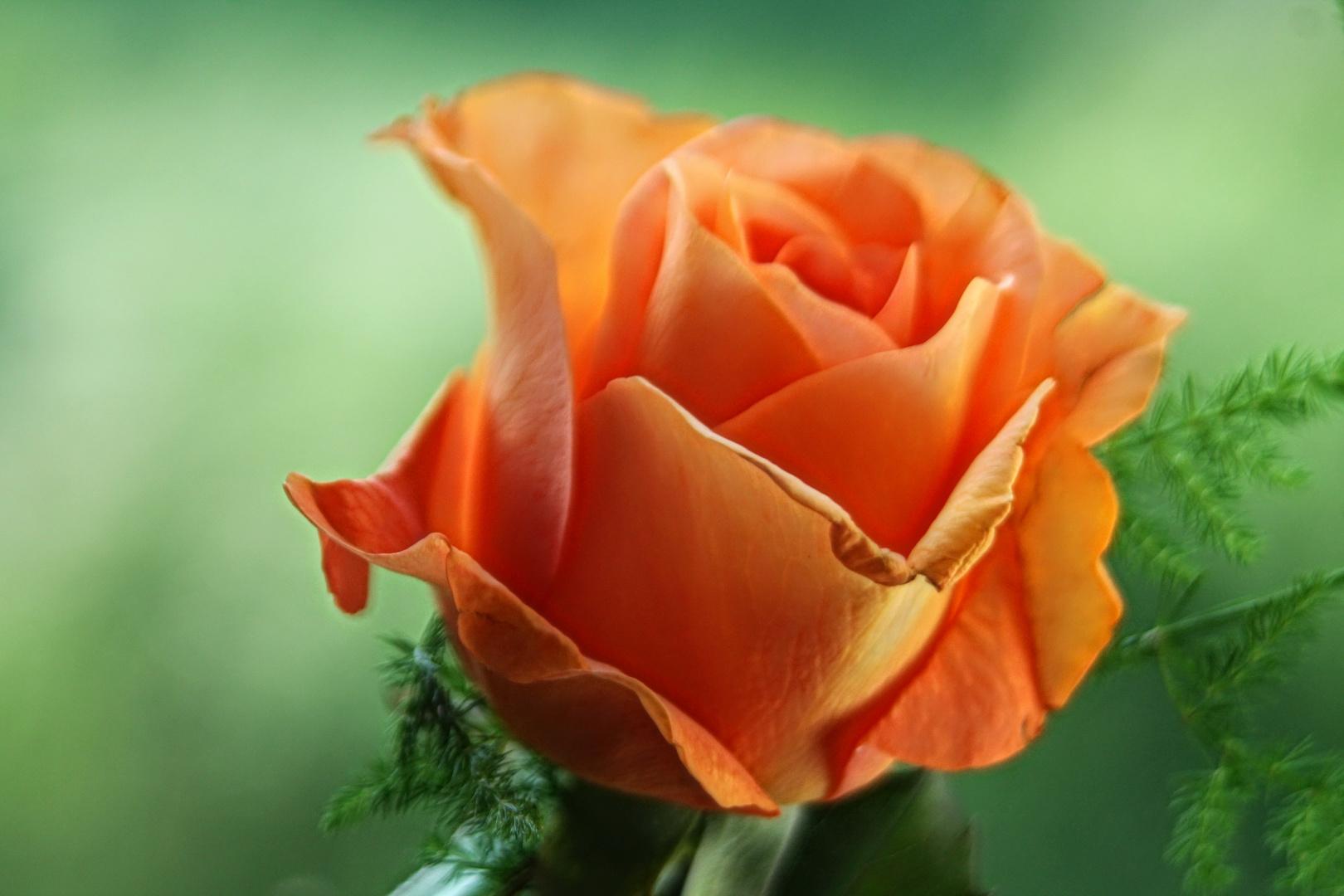 Ein Blumengruß an alle Hobbyfotografen