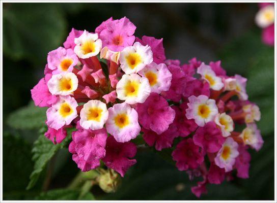 Ein Blumengruss aus Teneriffa