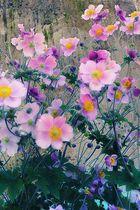 Ein Blumengruss