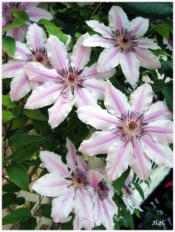 ein Blumengruss in Blassrosa