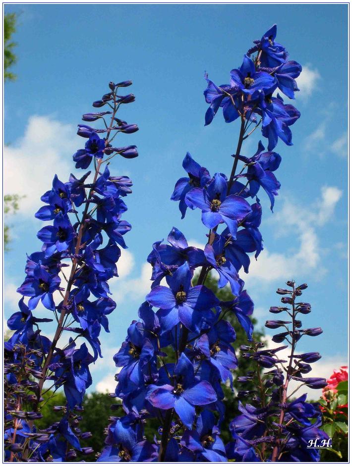 ein Blumengruss in Blau