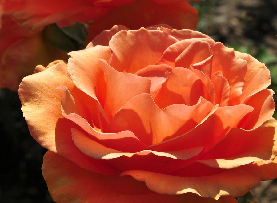 Ein Blumengruss zum Geburtstag