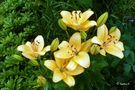 Ein Blumengruß zum Sonntag von Ingeborg K