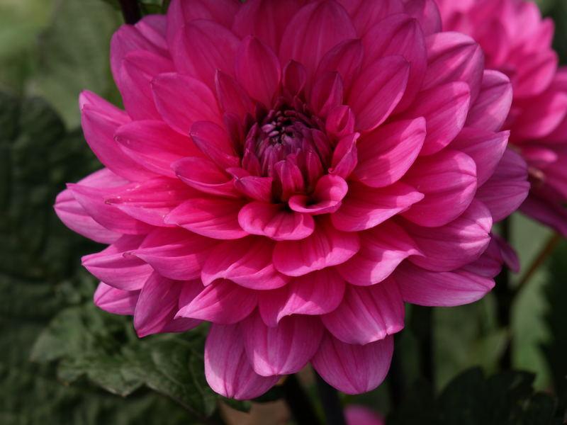 Ein Blumengruß zum Wochenanfang