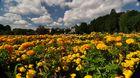 Ein Blumenmeer