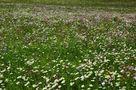 Ein Blumenmeer im schönen Metnitztal in Kärnten von Kosche Günther