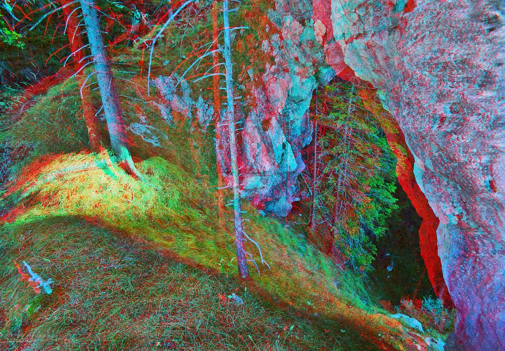 Ein Bogen steht im Walde