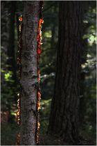 Ein brennender Baum?