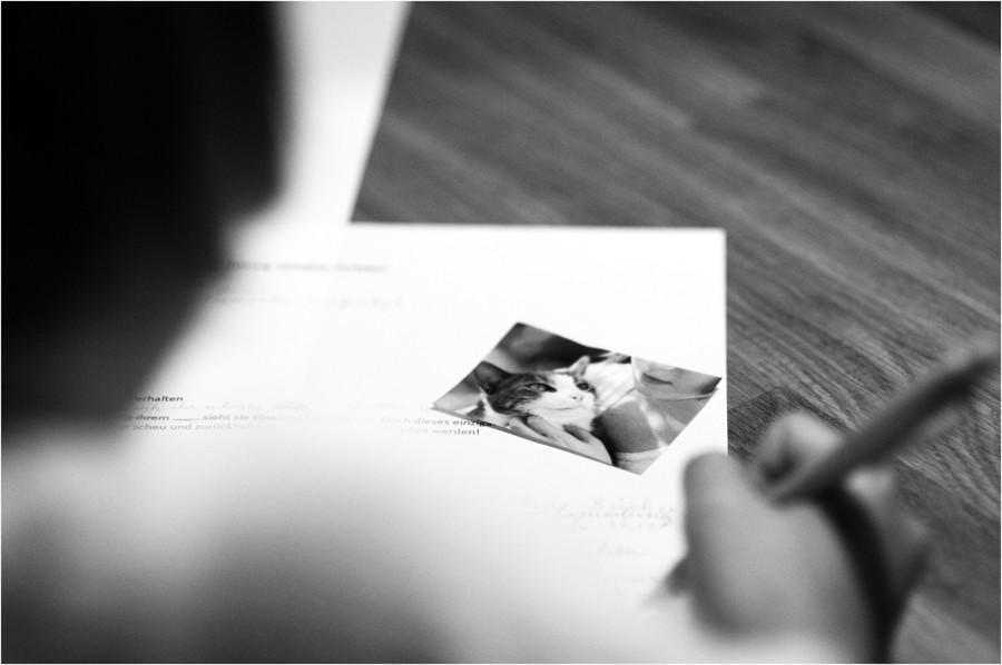 ein brief an den lieblingskater