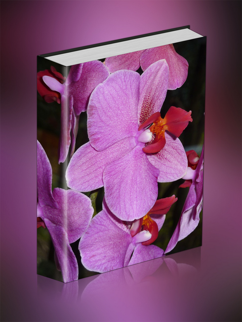Ein Buch in LILA