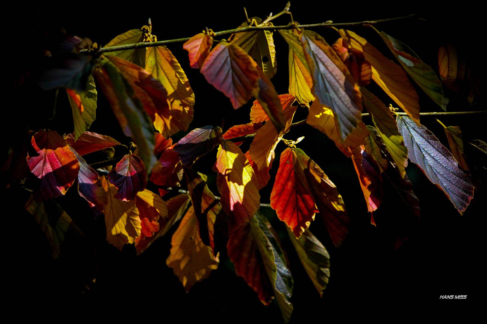 ein bunter Blätter Vorhang