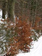 Ein bunter Farbtupfer im Winterweis