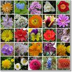 Ein bunter Frühlings-Blütengruß zum Muttertag