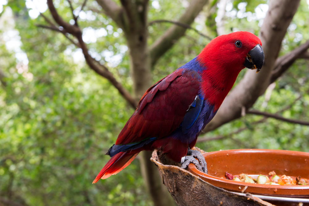 ein bunter papagei im loro parque teneriffa foto bild tiere zoo wildpark falknerei. Black Bedroom Furniture Sets. Home Design Ideas