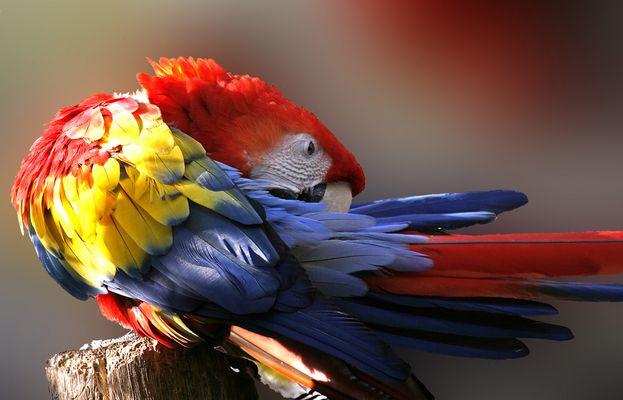 Ein bunter Vogel....................