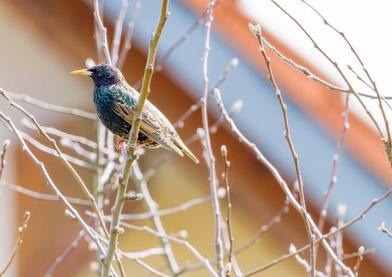 Ein bunter Vogel in meinem Garten :-)