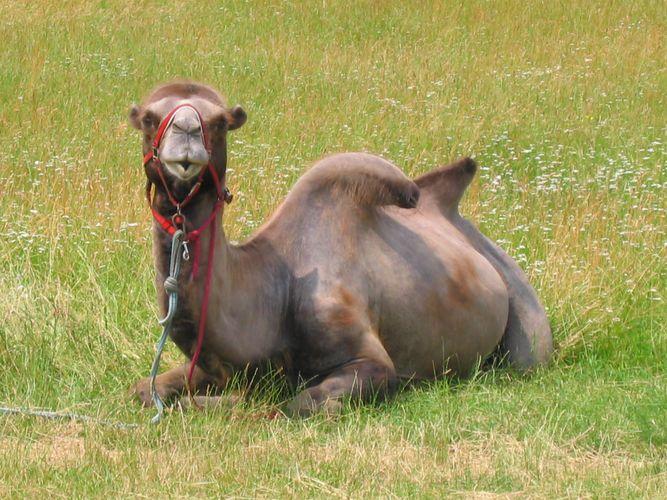 Ein Camel in Stuttgart Teil 2