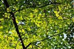 ein Dach aus grünen Blättern