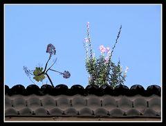 Ein Dach in Orotava