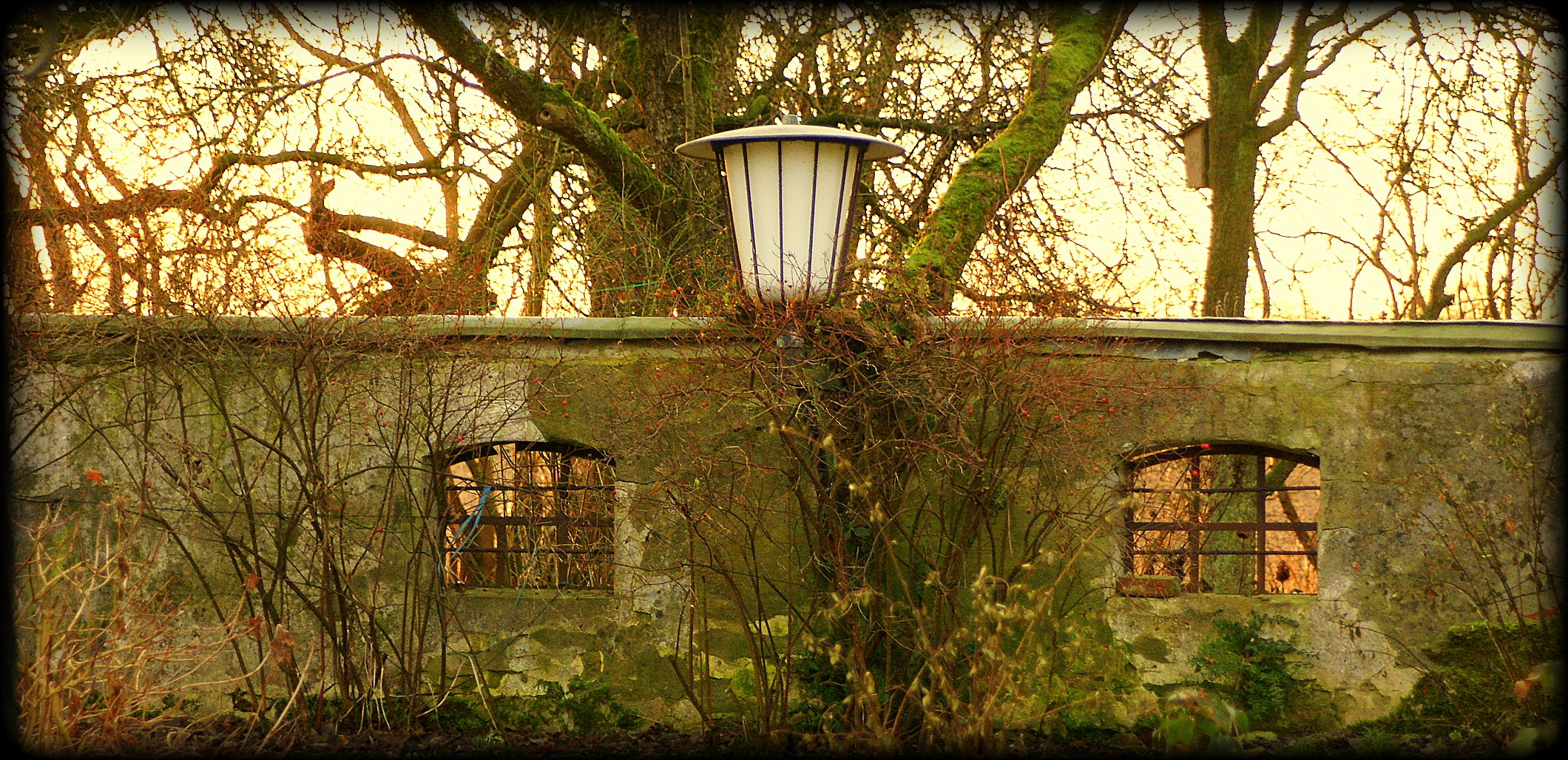 Ein Dezembermorgen in Friesland