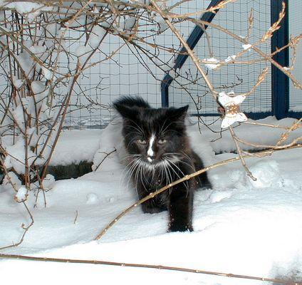 Ein echter Norweger im Schnee