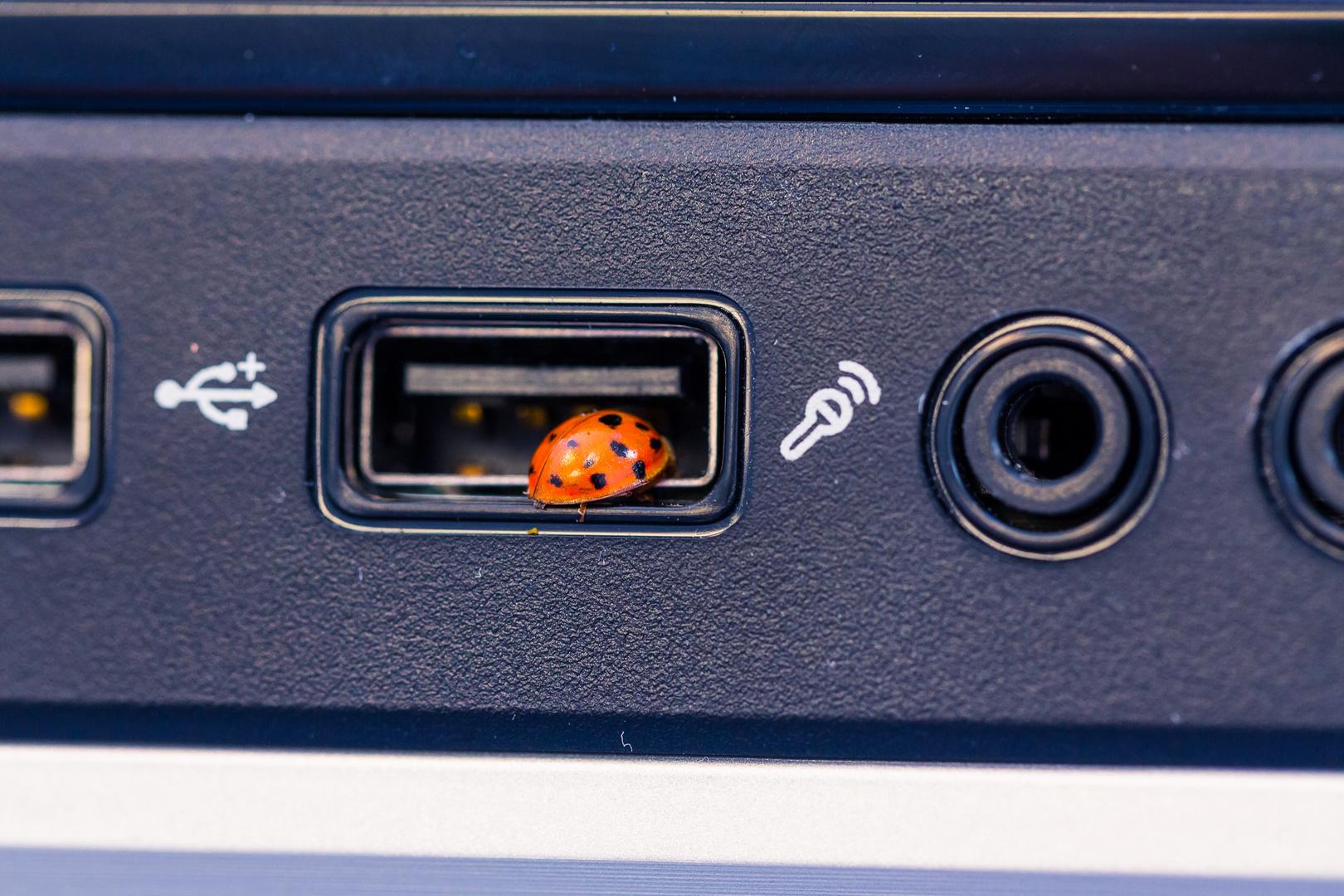 Ein echter USB-Bug