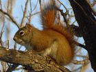 Ein Eichhörnchen im baum