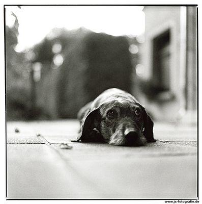 Ein eigenes Hundeportrait gehört ja heute schon zum guten Ton
