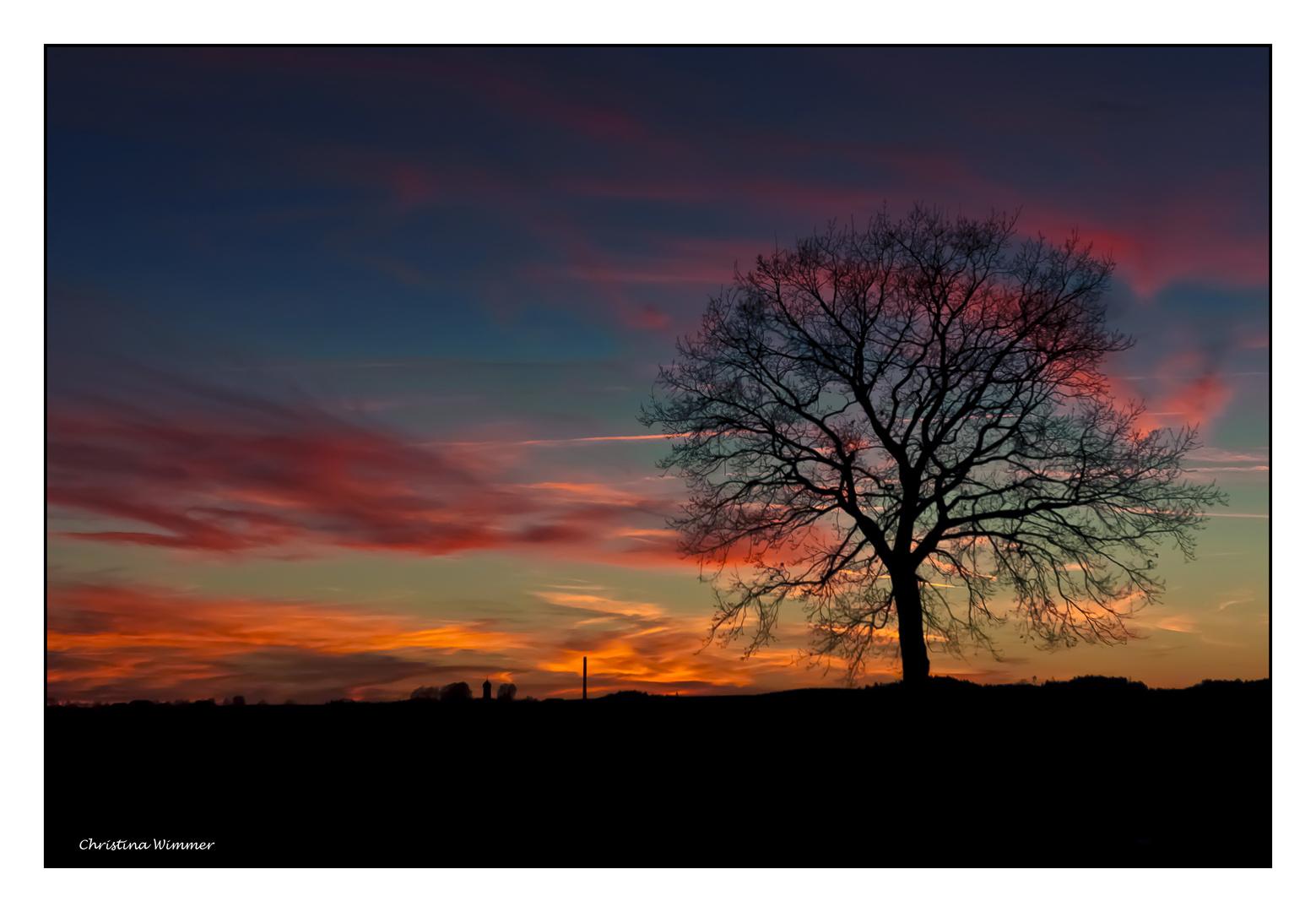 Ein einsamer Baum