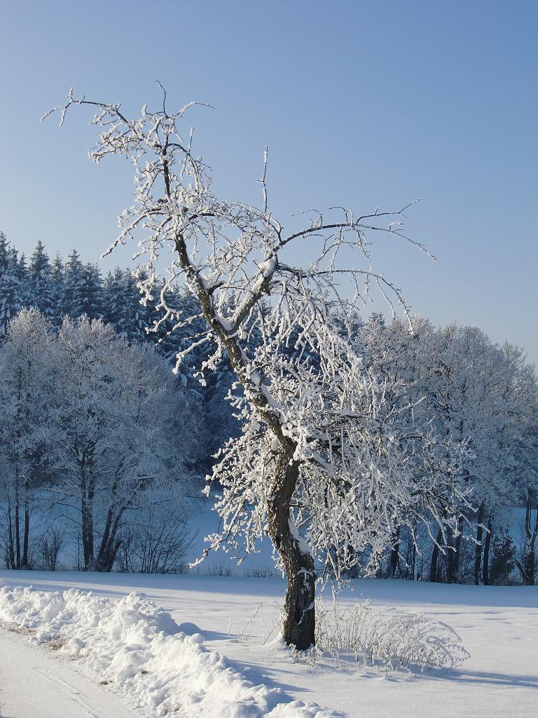 Ein einsamer Baum im kalten Winter