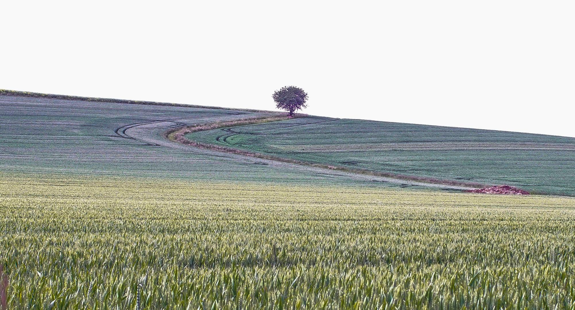 ein einsamer Baum im Weserbergland
