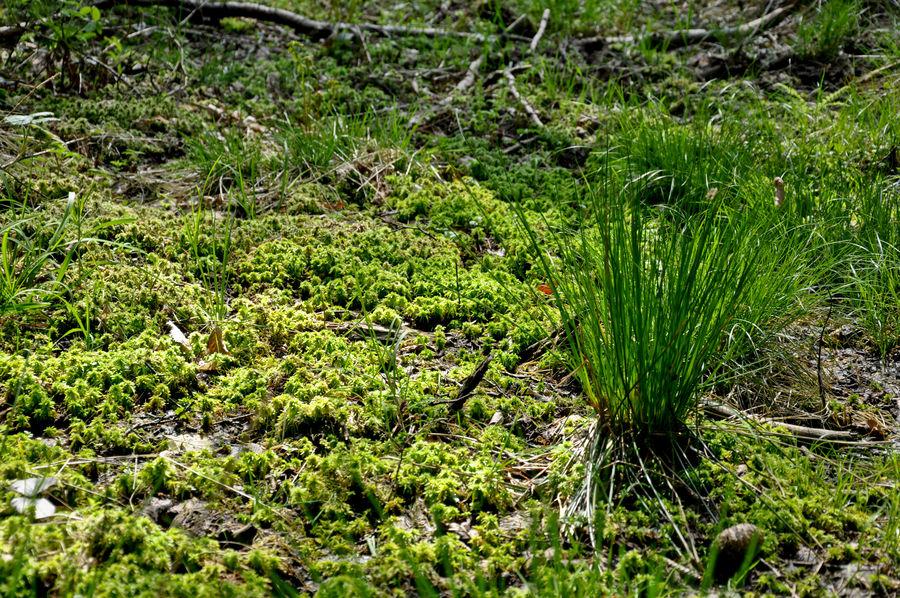 Ein einsames Gras
