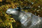 Ein Elch im Bielefeler Herbst