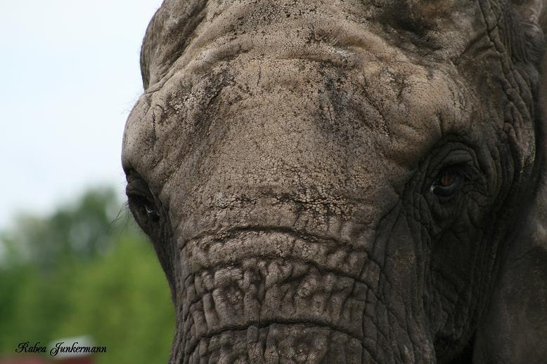 Ein Elefant ....