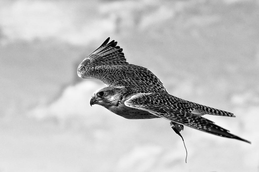 Ein eleganter Flieger