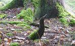 Ein Elf im Märchenwald....