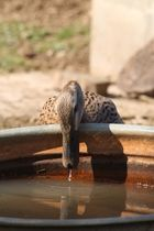 Ein erfrischender schluck Wasser