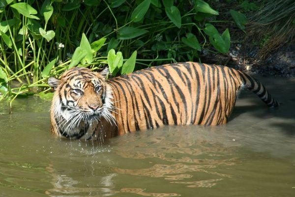 Ein erfrischendes Bad bei großer Hitze