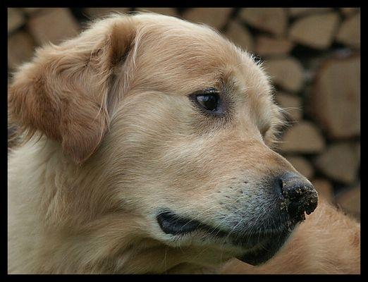 ein etwas anderes Hundeportrait - II