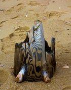 ein fabeltier am strand vor westerland