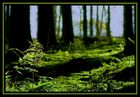 Ein Färnlein steht im Walde ganz still und stumm