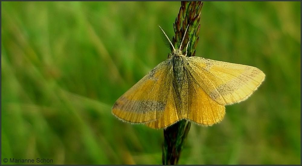 Ein Faltermann im gelben Mantel...