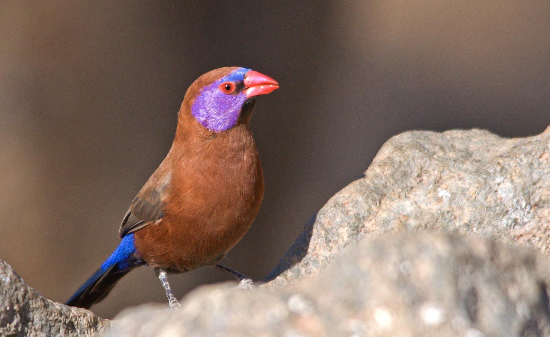Ein farbenfrohes Vögelchen......