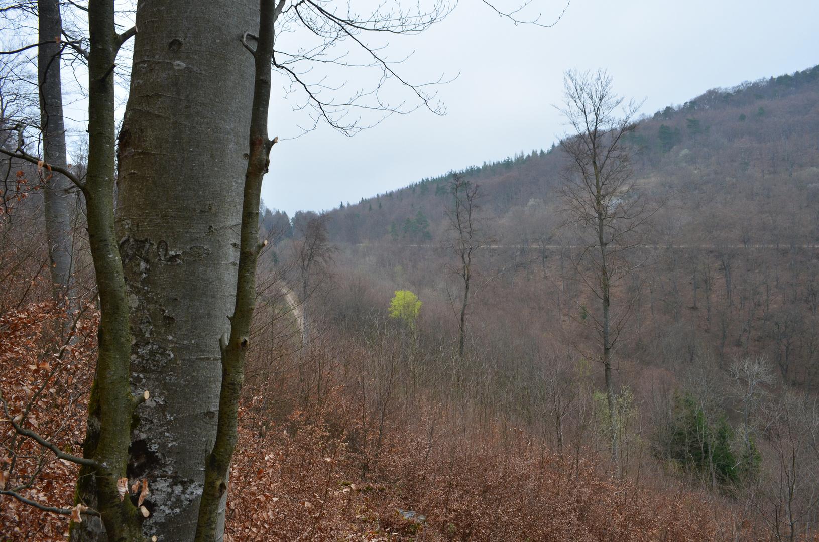 Ein Farbfleck im kahlen Wald