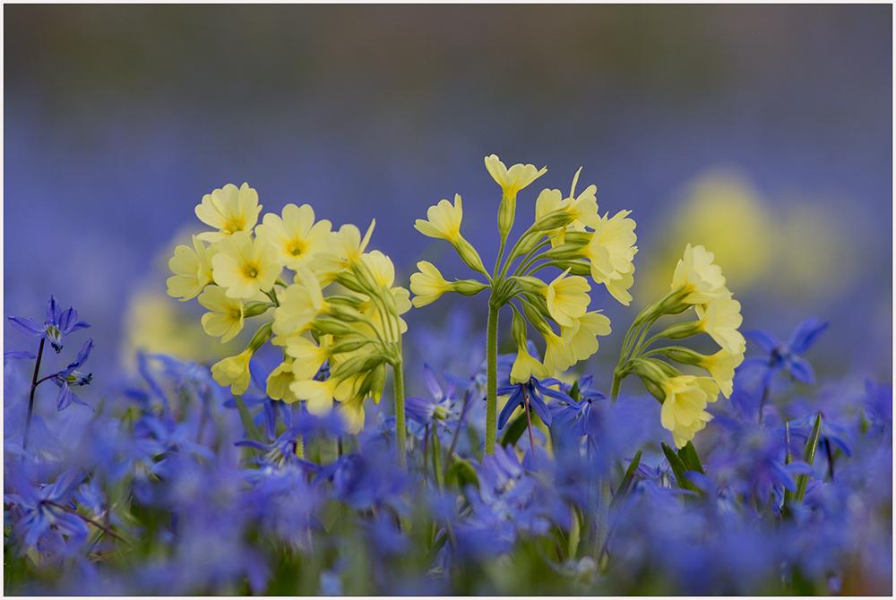 Ein Farbtraum in gelb-blau...
