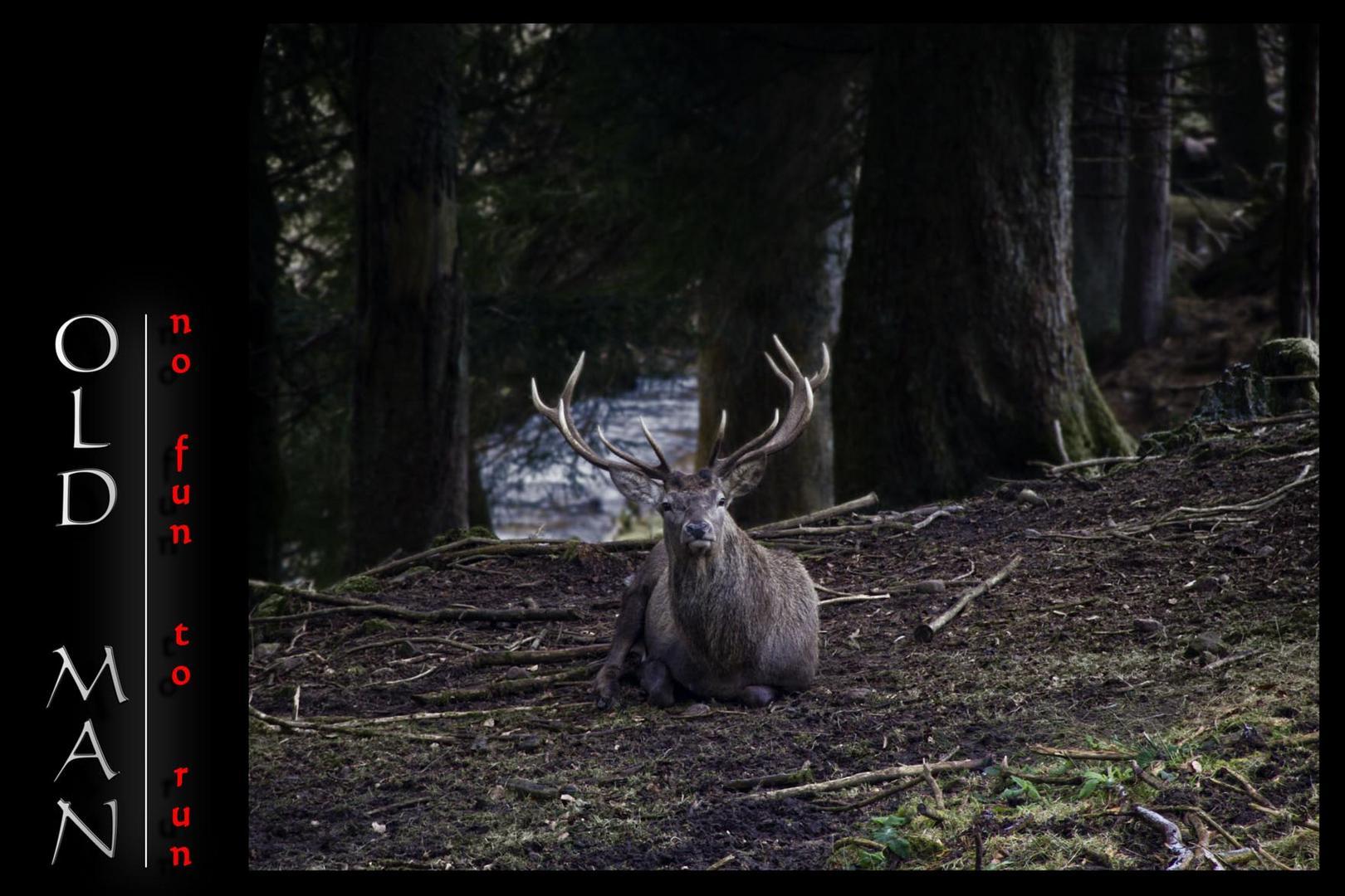 Ein fauler Hirsch ^^