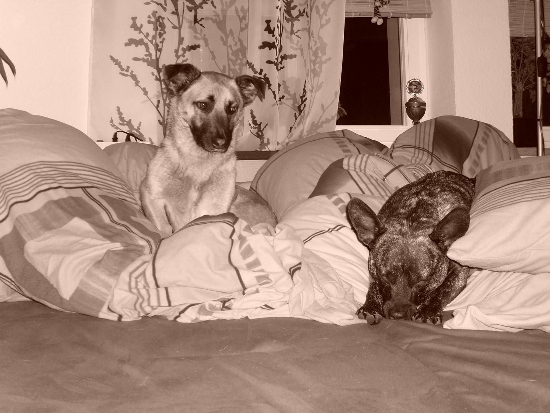 ein fauler Tag, 2 faule Hunde