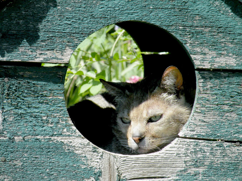Ein feiner Beobachtungsturm dort im Futterhaus der Vögel.