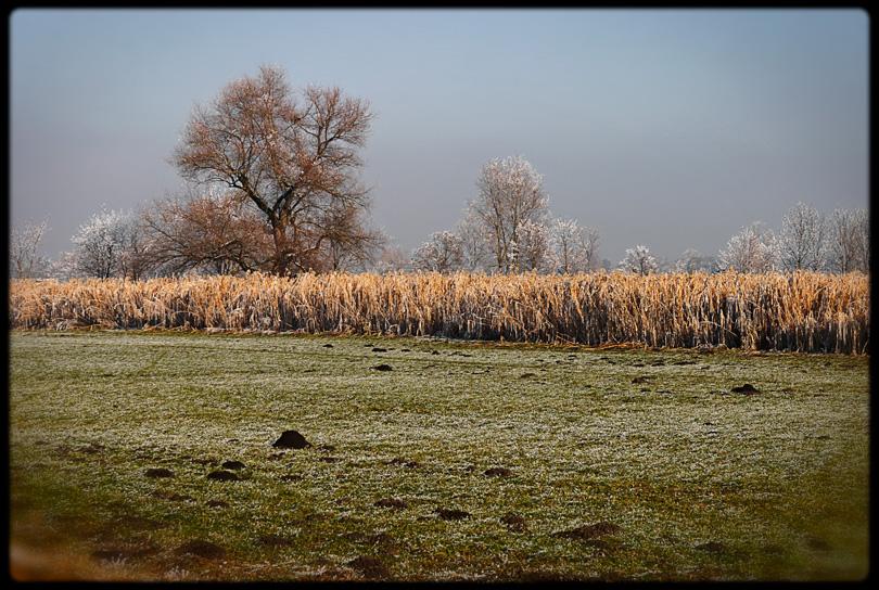 Ein Feld im Winter mit Maulwurfshügeln und so